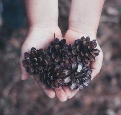 Os elementos que a Mãe Natureza nos oferece -Atelier Sente a Natureza - Cristina Perneta