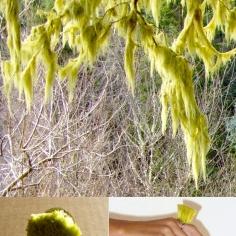 Ring - Moss